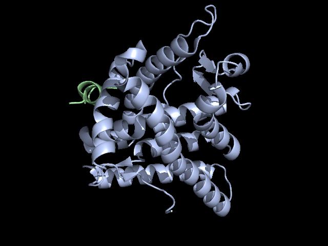 3 ketosteroid receptors