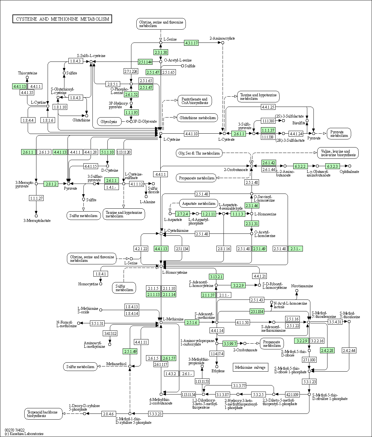 KEGG PATHWAY: Cysteine and methionine metabolism ... on