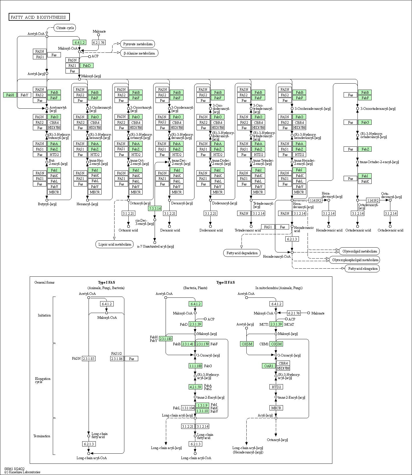 KEGG PATHWAY: Fatty acid biosynthesis - Bartonella bacilliformis