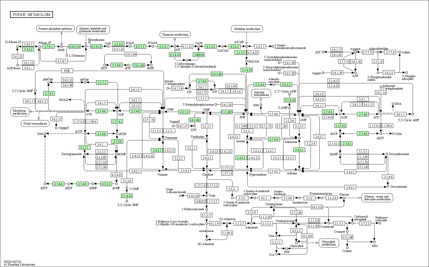 KEGG PATHWAY: Purine metabolism - Bartonella bacilliformis