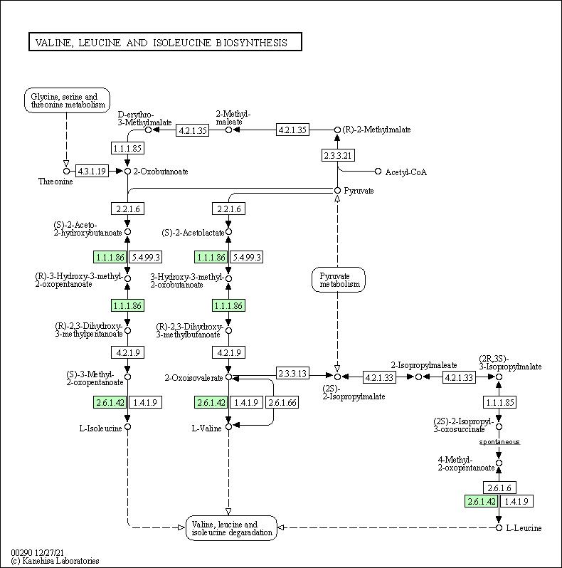 KEGG PATHWAY: Valine, leucine and isoleucine biosynthesis