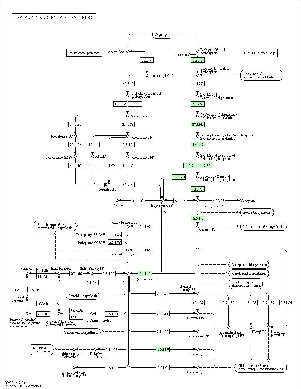 BioModels Database