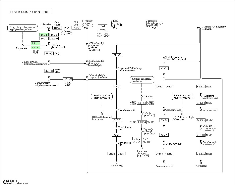 KEGG PATHWAY: Novobiocin biosynthesis - Bartonella quintana