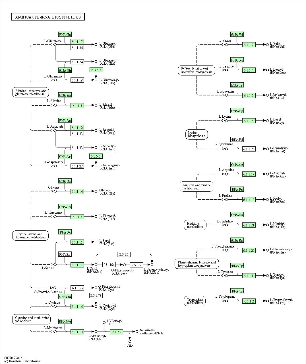 KEGG PATHWAY: Aminoacyl-tRNA biosynthesis - Bartonella
