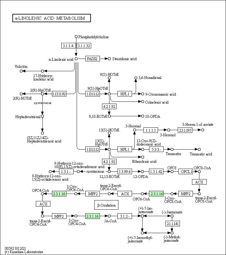 Kegg Pathway Alpha Linolenic Acid Metabolism