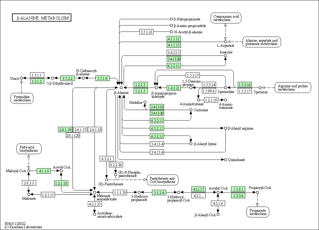 arginine sythesis pathway The pathway for cysteine synthesis was covered in sulfate assimilation  synthesis of arginine is an eight step process starting with the amino acid glutamate.