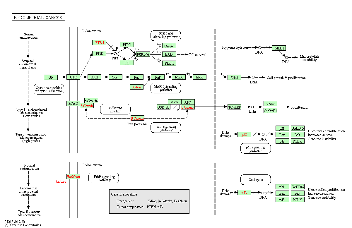 Kegg Pathway Endometrial Cancer Homo Sapiens Human