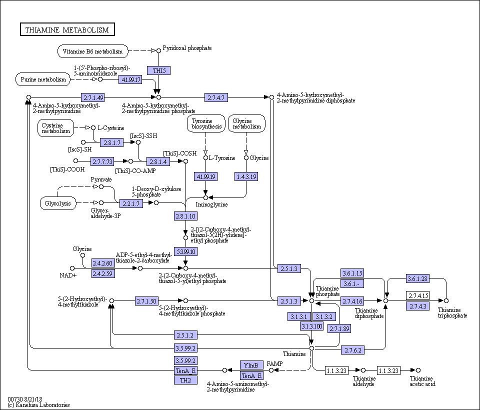 KEGG PATHWAY: Thiamine metabolism