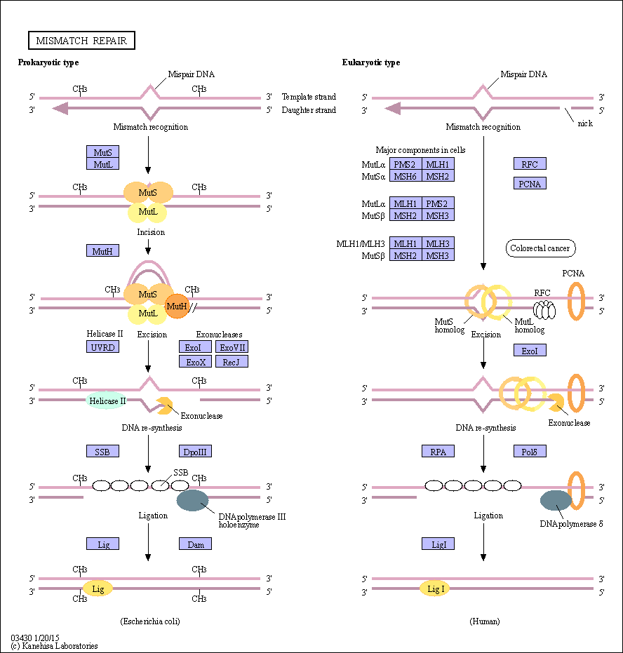map of the genome with Show Pathway on Genome further 640 moreover Kentucky state maps as well Show pathway as well How The Gut Microbiome Influences The Brain And Vice Versa.