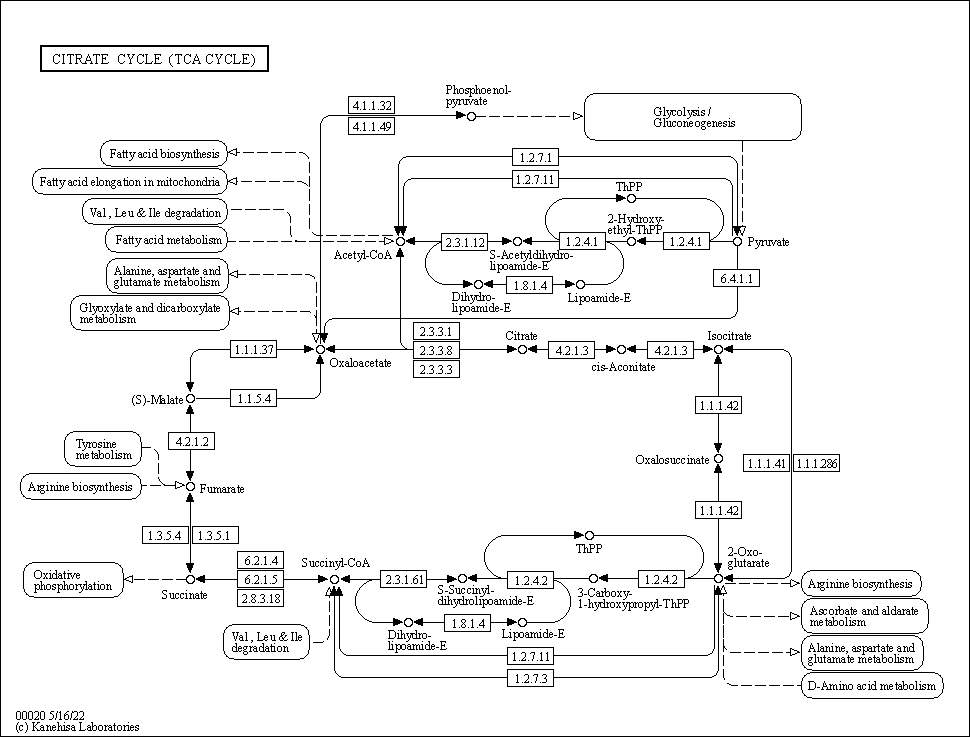KEGG PATHWAY: Citrate cycle (TCA cycle) - Reference pathway
