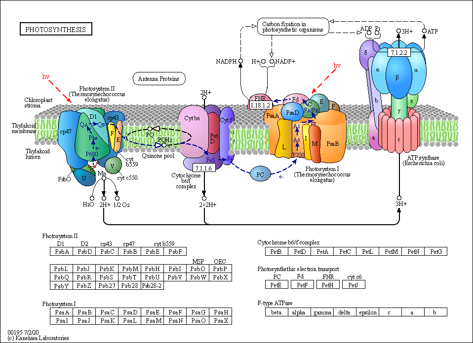 Kegg Pathway Photosynthesis Reference Pathway