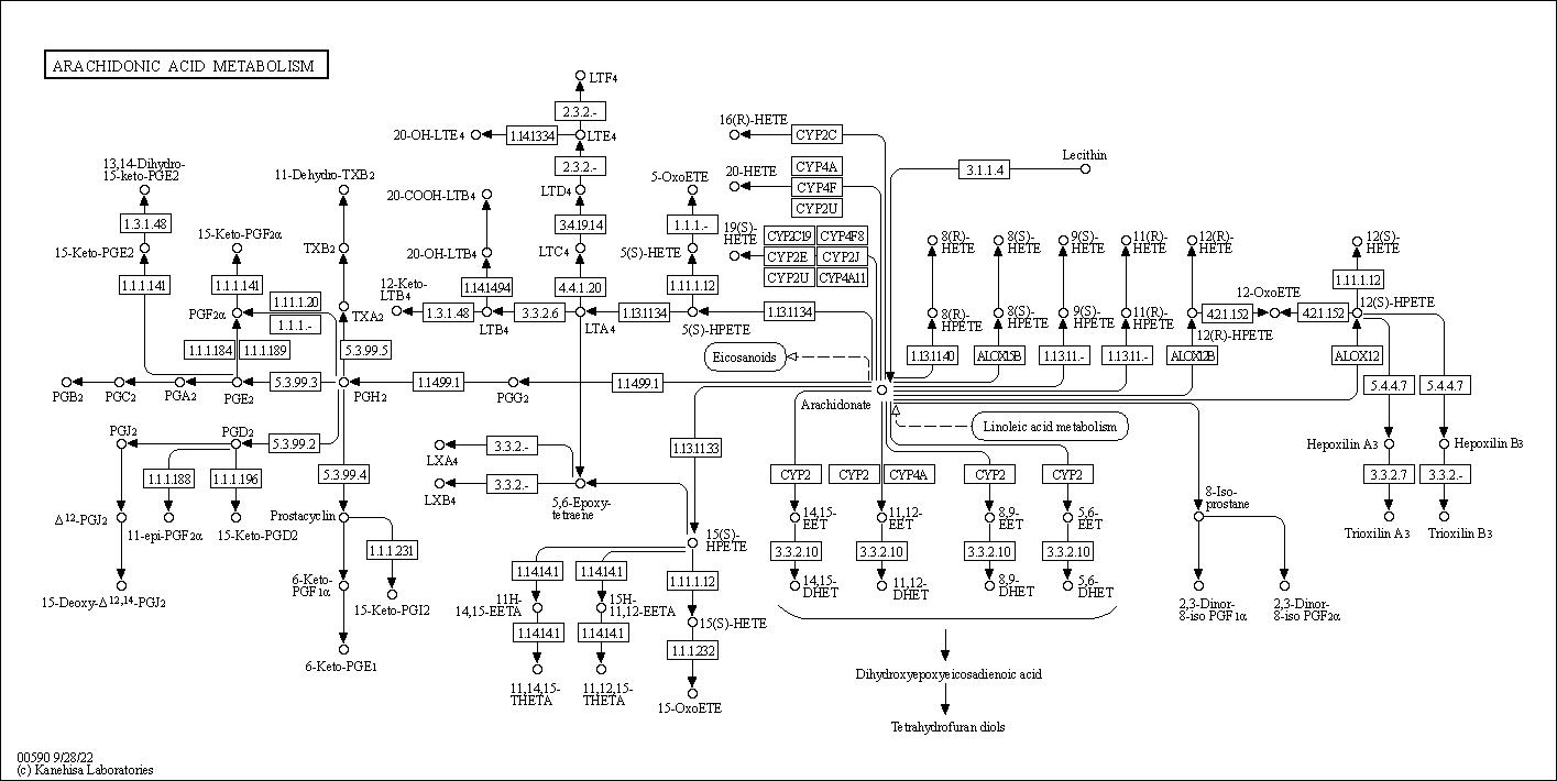 kegg pathway  arachidonic acid metabolism