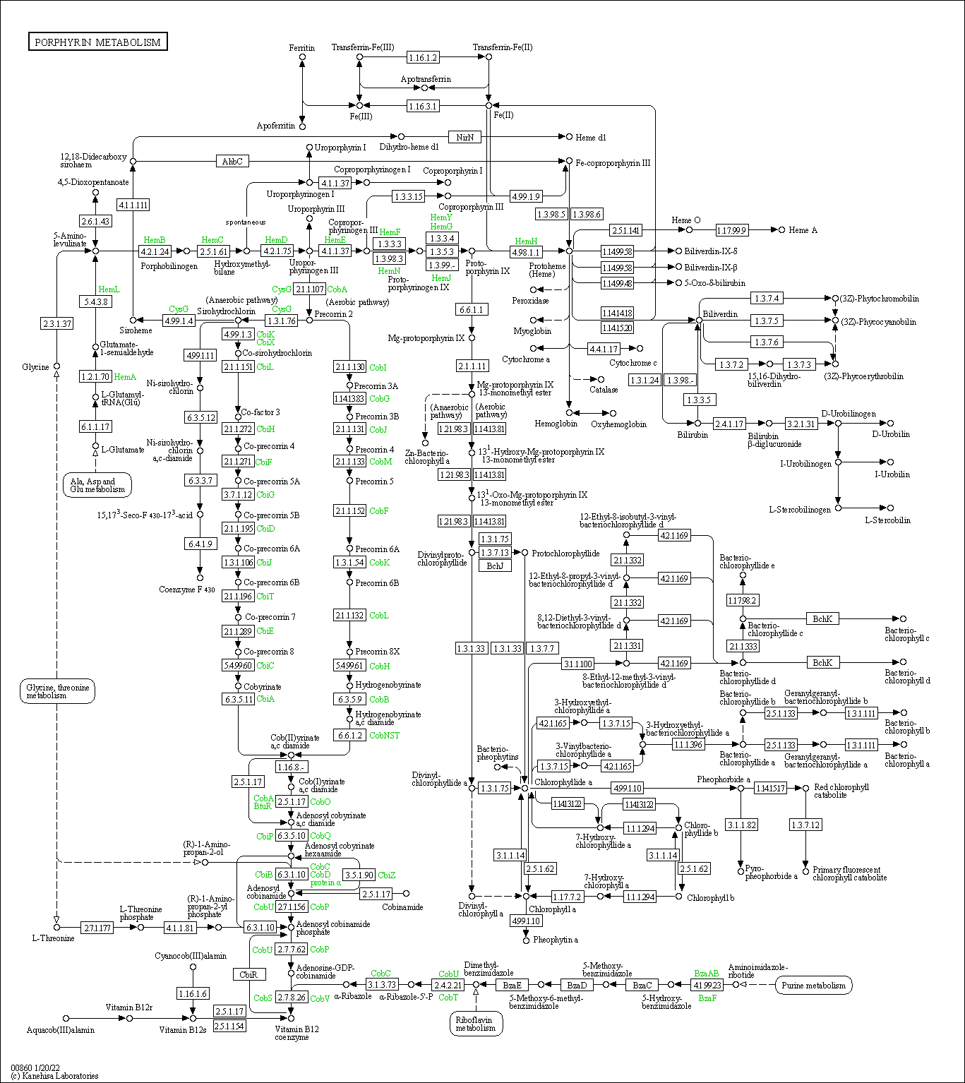 kegg pathway porphyrin and chlorophyll metabolism reference pathway