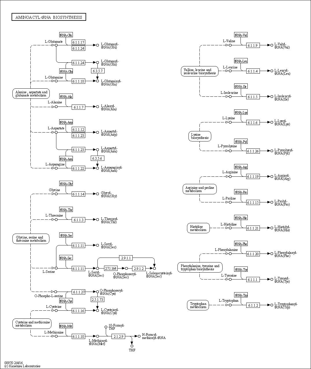 Aminoacyl Trna Biosynthesis