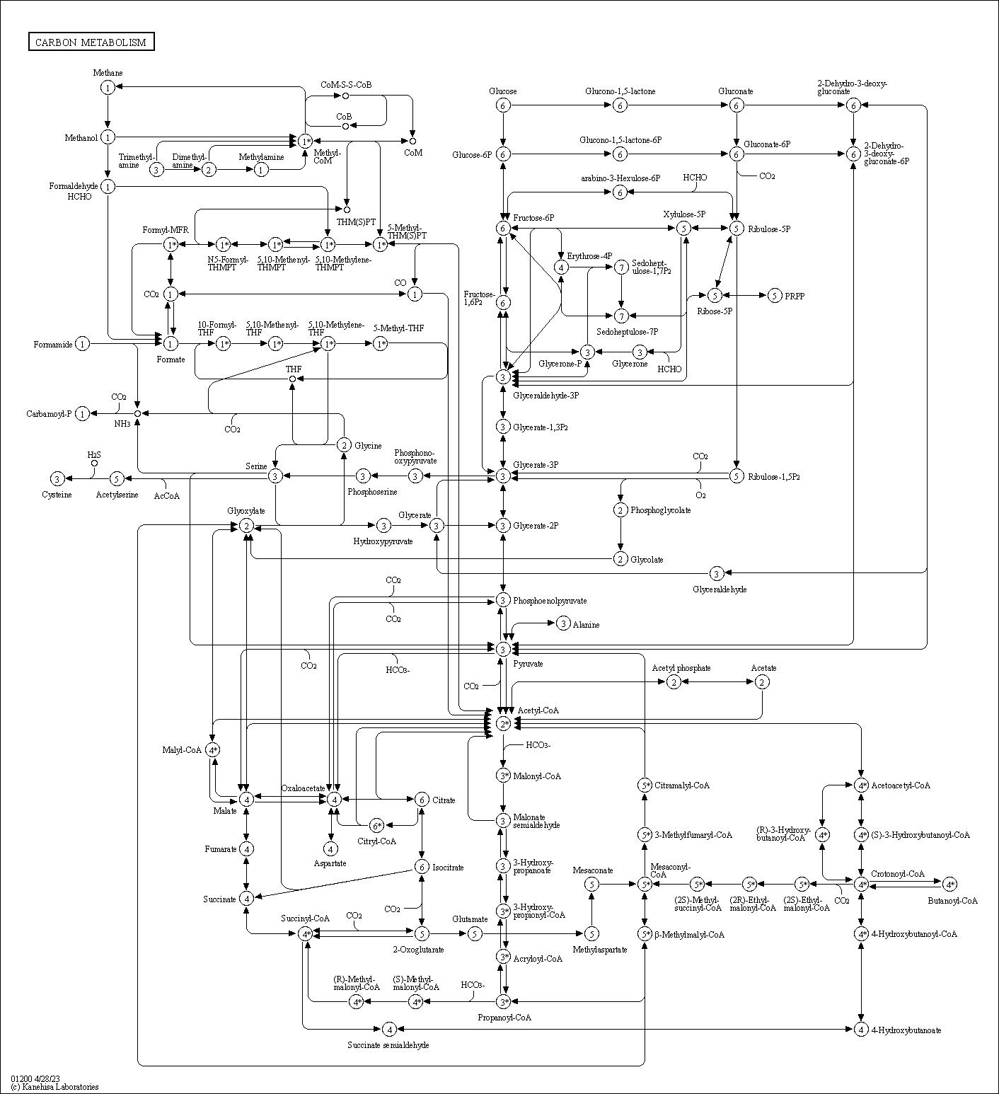 KEGG PATHWAY: Carbon metabolism - Reference pathway