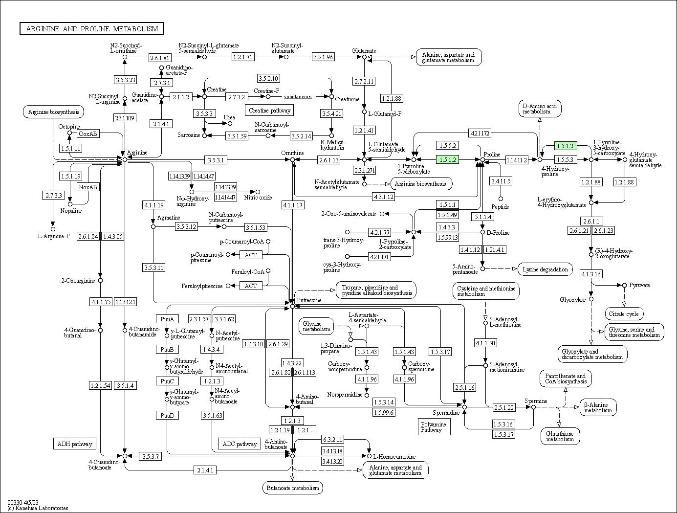 KEGG PATHWAY: Arginine and proline metabolism - Mesoplasma