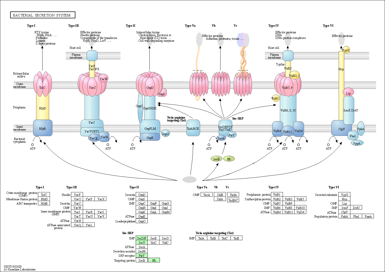 how to read kegg pathway