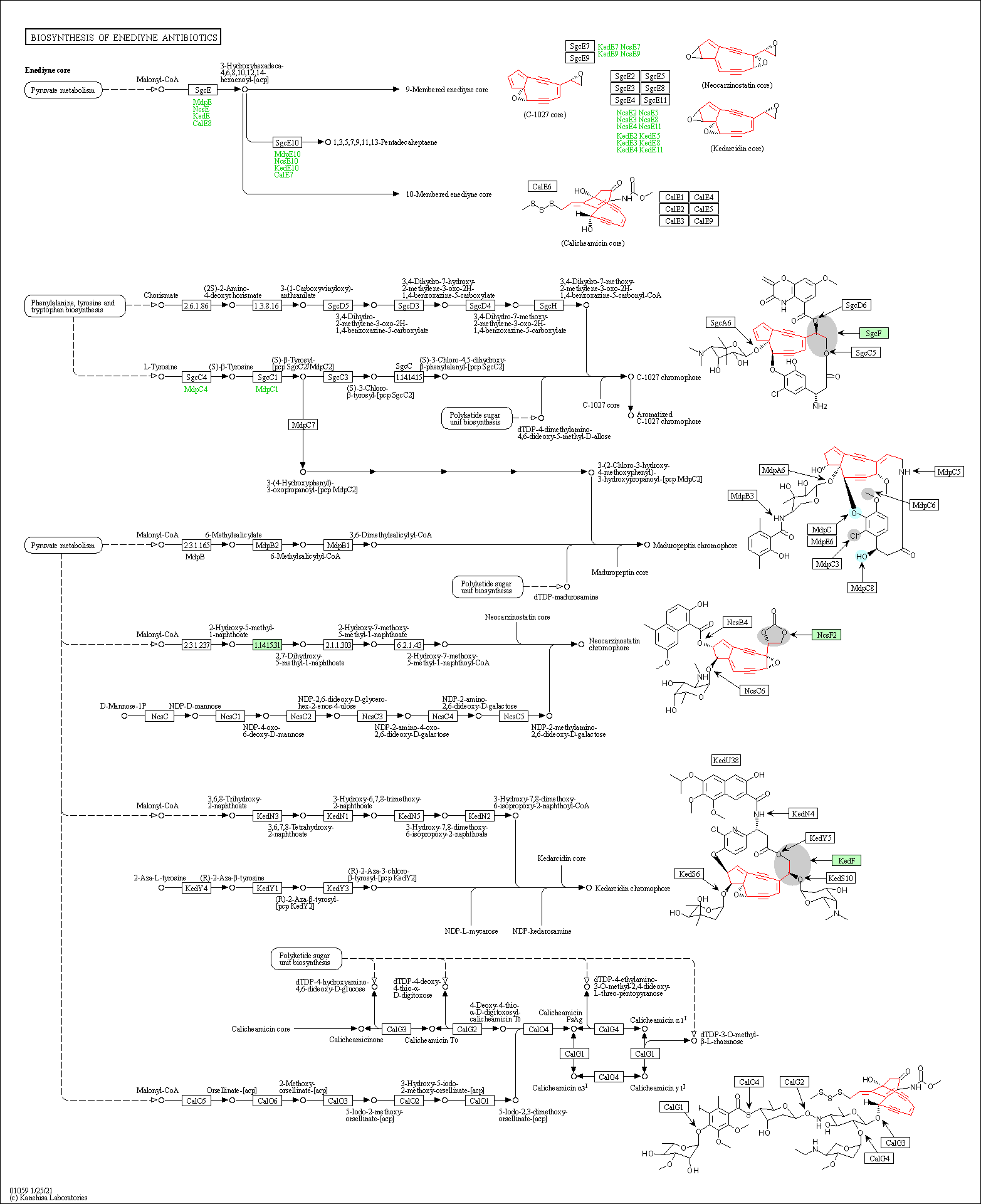 KEGG PATHWAY: Biosynthesis of enediyne antibiotics