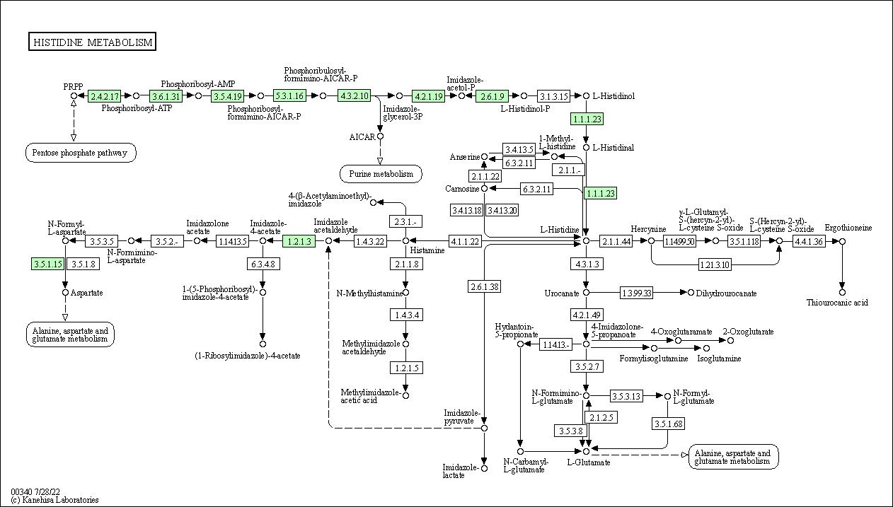KEGG PATHWAY: Histidine metabolism - Prochlorococcus marinus MIT 9301