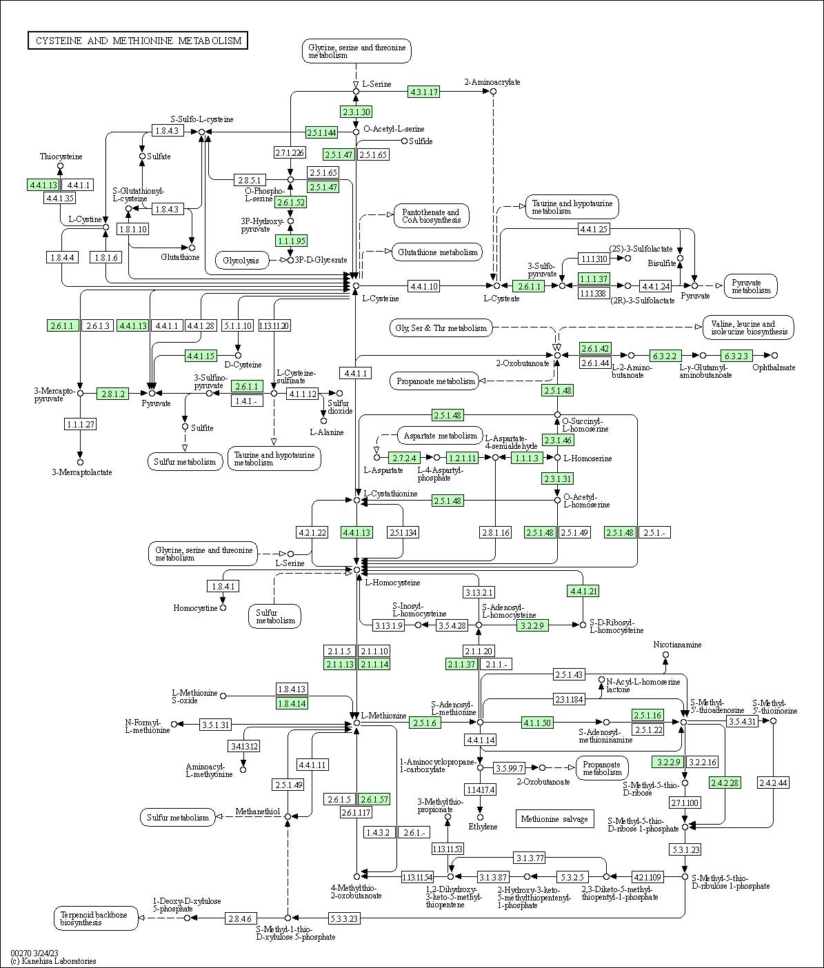 KEGG PATHWAY: Cysteine and methionine metabolism - Shigella