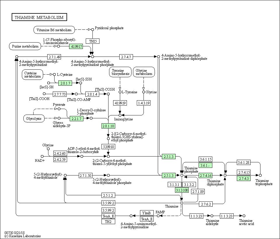 KEGG PATHWAY: Thiamine metabolism - Synechocystis sp  PCC 6803