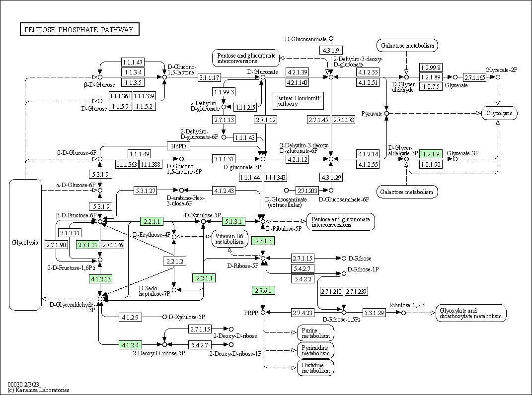 KEGG PATHWAY: Pentose phosphate pathway - Ureaplasma parvum