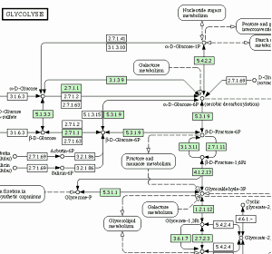 Kegg analysis tool